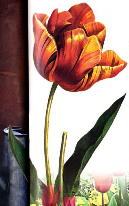 Вырезать картинки с тюльпанами (или сделать цветные копии).  Покрыть шкаф белым прозрачным лаком и подождать...