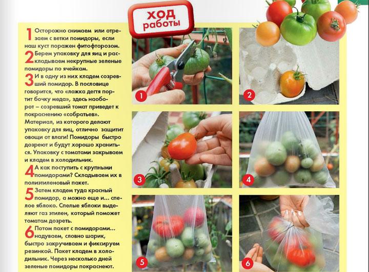 Как сделать чтобы зеленые помидоры покраснели дома 607