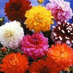 Название цветы по алфавиту